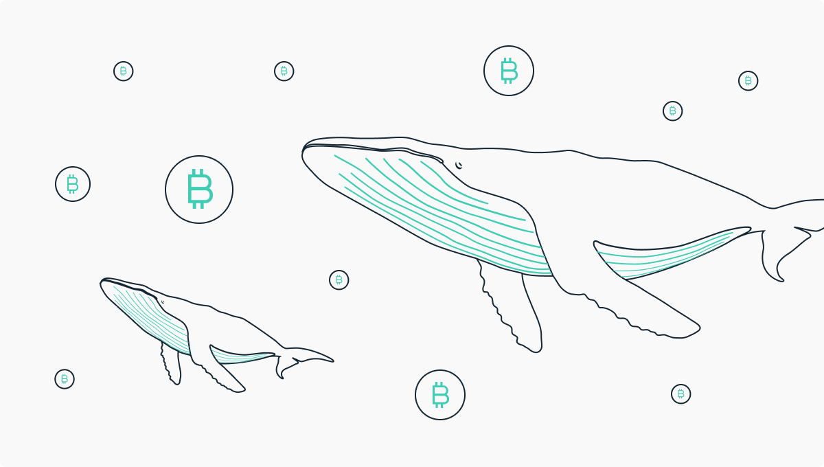 A splash in the market: What made whales change their mind?